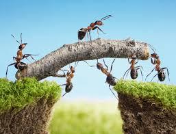 Feenstra Mediation bij arbeidszaken en teamondersteuning